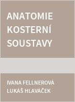 Anatomie kosterní soustavy člověka - praktická cvičení