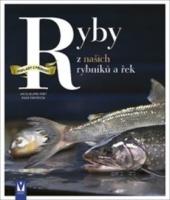 Ryby z našich rybníků a řek